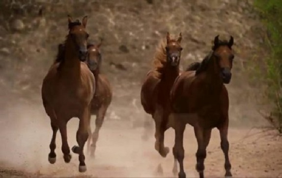 horses-in-a-dream-OuBdOYZIlW8-700x394-474x300.jpg