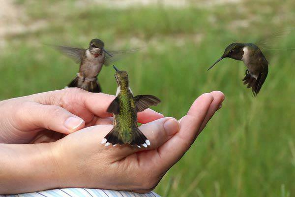 joy of the Hummingbird.jpg